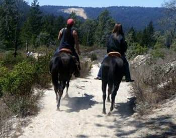 Backside of a man and woman riding on horseback surrounded by green pines