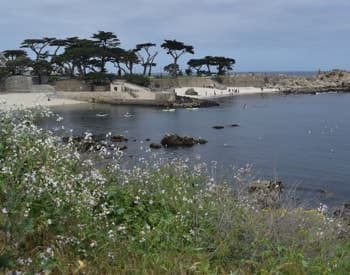 View of the Bay surrounded by the shore with flowers, trees and rocks amidst blue skies